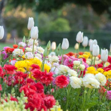 A photo of a flower garden.