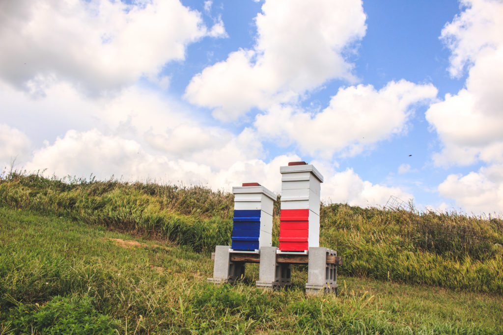 Beehives painted red, white and blue