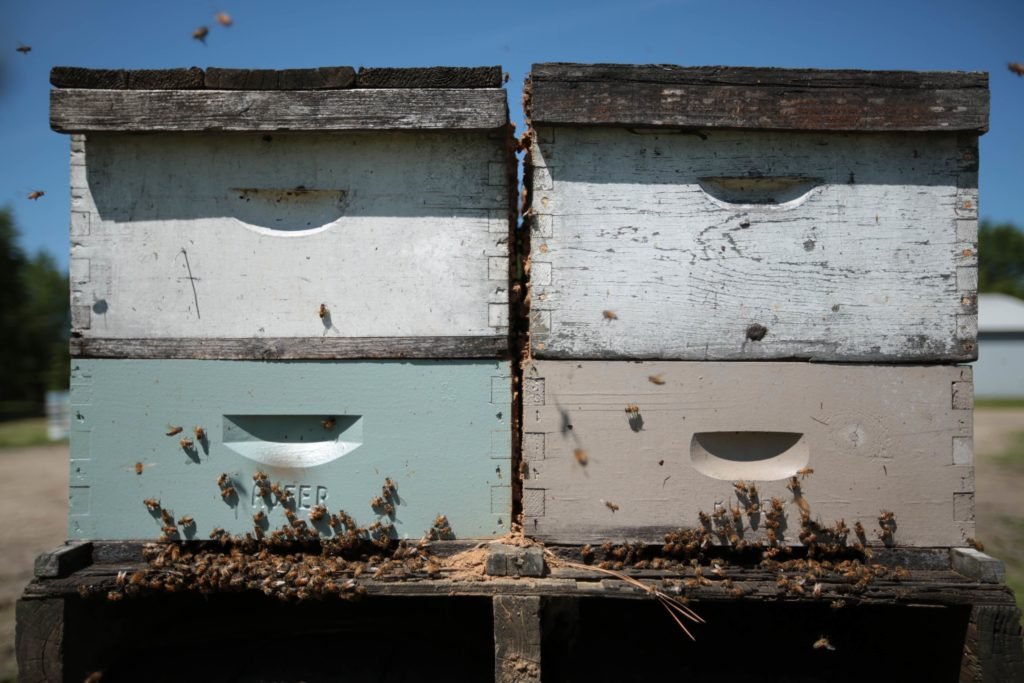 Photo of four stacked beehives.