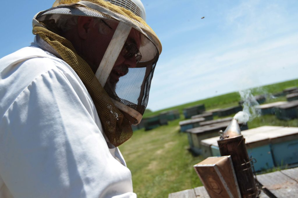 Photo of beekeeper Darrel Rufer inspecting a bee hive.