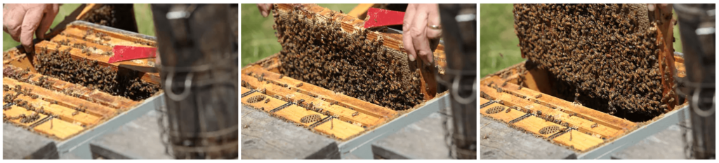 Photos of bee hive frames.